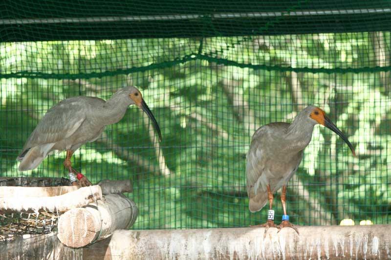 多摩動物公園は2007年に佐渡トキ保護センターからトキを預かり、非公開施設で飼育中。佐渡以外での国内…