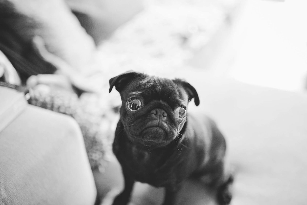 I never understood what the big deal was with pugs, then I met Nala... https://t.co/NSIo1DsX5a