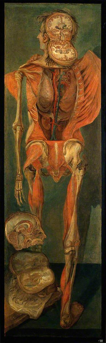 #artoftheday 'A Standing Dissected Man, Posterior View...' by D'Agoty @WellcomeLibrary https://t.co/2yxgdcQBMp #art https://t.co/VCaxO0NiZJ
