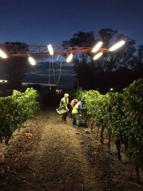 Harvest has officially begun! Cheers to our vineyard crew and a #glorious 2016 harvest. https://t.co/LfSm4VsPeE