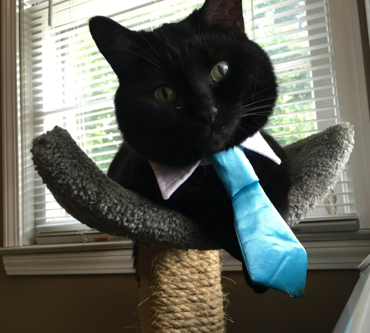 Raphael is dressed and looking purrfect in celebration of #NineLives opening in theaters this Friday 8/5. #ad https://t.co/3GtzcMaGTI