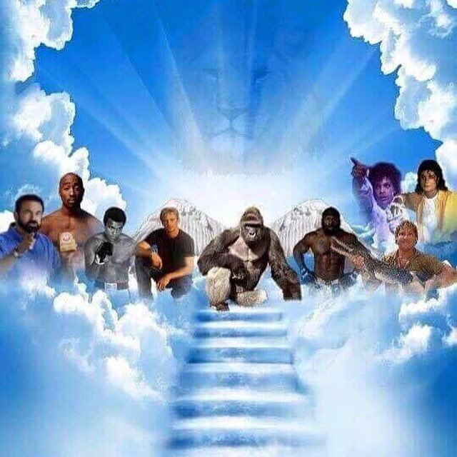 Good to know my dad is up there chillin with #Harambe and the whole fam. https://t.co/ZHKdN7Se4H