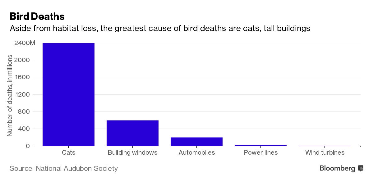 "Trump: Windpower 'kills all your birds. All your birds, killed.""  Well, pretty much https://t.co/h8vJKVraAV"
