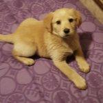 Hermosa y tierna cachorra busca familia adoptante en #Iquique. Tratar con @susesnich https://t.co/0c5SHamj0K