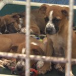 Clear the Shelters event aims to find pets new homes https://t.co/smMUVvI0AS #dogs #cats #Lawton #AdoptDontShop https://t.co/6tihKuf5k9