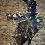 Bull riding @OgdenPioneerDay Rodeo. @standardex https://t.co/bQyIkL1Dus