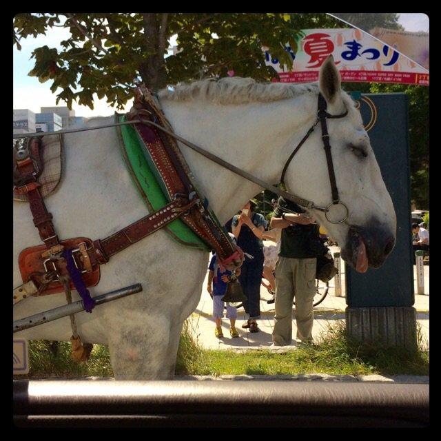 運転してたら隣の車線は馬。 これが北海道クオリティ(๑•̀ㅂ•́)و✧ https://t.co/49Gi3U9SlJ