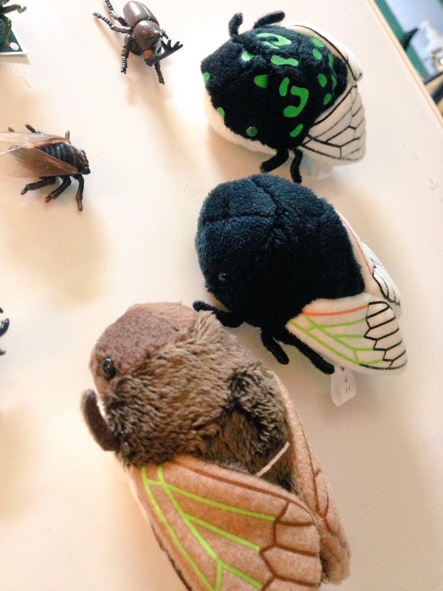 Cicada plush magnet from @gusomama !! #博物ふぇす   茶色の…