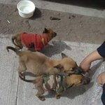 Hogar Temporal URG botaron 3 cachorros tamaño pequeño arriba LaTirana c/Progreso #Iquique ➡ https://t.co/wMud9lohXz https://t.co/8RM0jl9ezK
