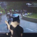 Aquí con mi gatico dándole una mano a nuestros ciclistas #TourDeFrancia #VamosColombia https://t.co/pUnPgxfbO3