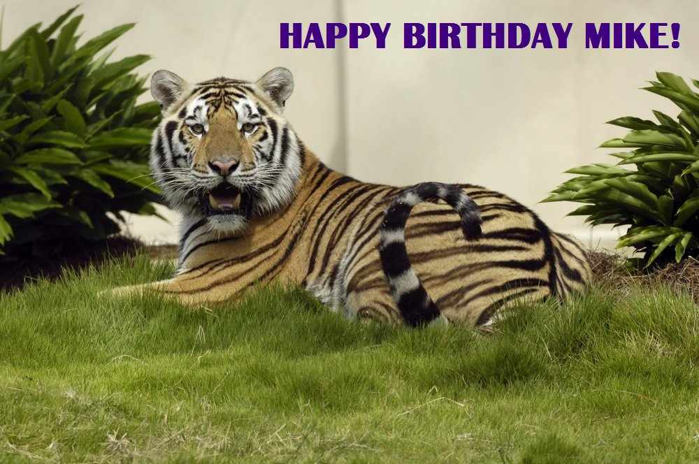 Happy Birthday @MikeTigerVI! https://t.co/xmNLmig3aD