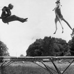 Изобретатель батута Джордж Ниссен прыгает на своем детище с кенгуру. США. 1960 г. https://t.co/E2CeNSJUbn