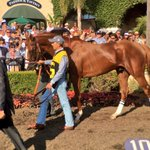 Chrome is in the paddock for the Gr II San Diego Handicap. https://t.co/1HNpRtafeL