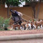 Calabar Herdsmen. They are less dangerous (to humans) than Fulani Herdsmen. #BingoLivesMatter https://t.co/oBsAJ5QVKz