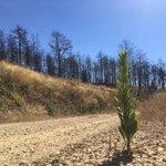 Viaje por la Sierra de Gata, casi un año después del incendio que quemó 7.833 hectáreas. Mañana, en @hoyextremadura https://t.co/ndl8jA6LpC