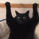 Дала коту кошачьей мяты, и вот уже второй час он в таком положении. https://t.co/ZNpta1cu3Z