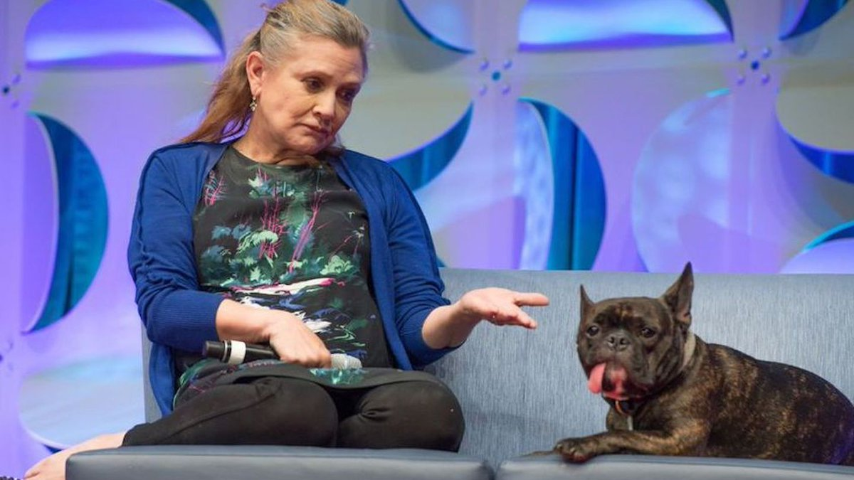 Wait, Does Carrie Fisher's Dog Gary Have A Cameo In Star Wars: Episode VIII?