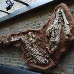 Complete Mosasaurus wordt vandaag geveild op Catawiki. Koop dat ding Mtricht (68M jaar oud) https://t.co/EdbybkzM3A https://t.co/O42AoJ6c5Y