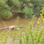 Is this the Lochness monster of the #River Severn??!! # gloucester https://t.co/wSJsXsfdvC