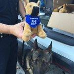 Toledo police to host stuffed animal fundraiser to benefit K-9 unit on Monday.  https://t.co/S7gZPQdTOj https://t.co/soRtwWqaql