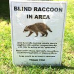 """This is so Vancouver. A sign on the lawn in the West End. """"Don't take photos of the blind raccoon."""" 😆 https://t.co/hY7vuyUYa8"""