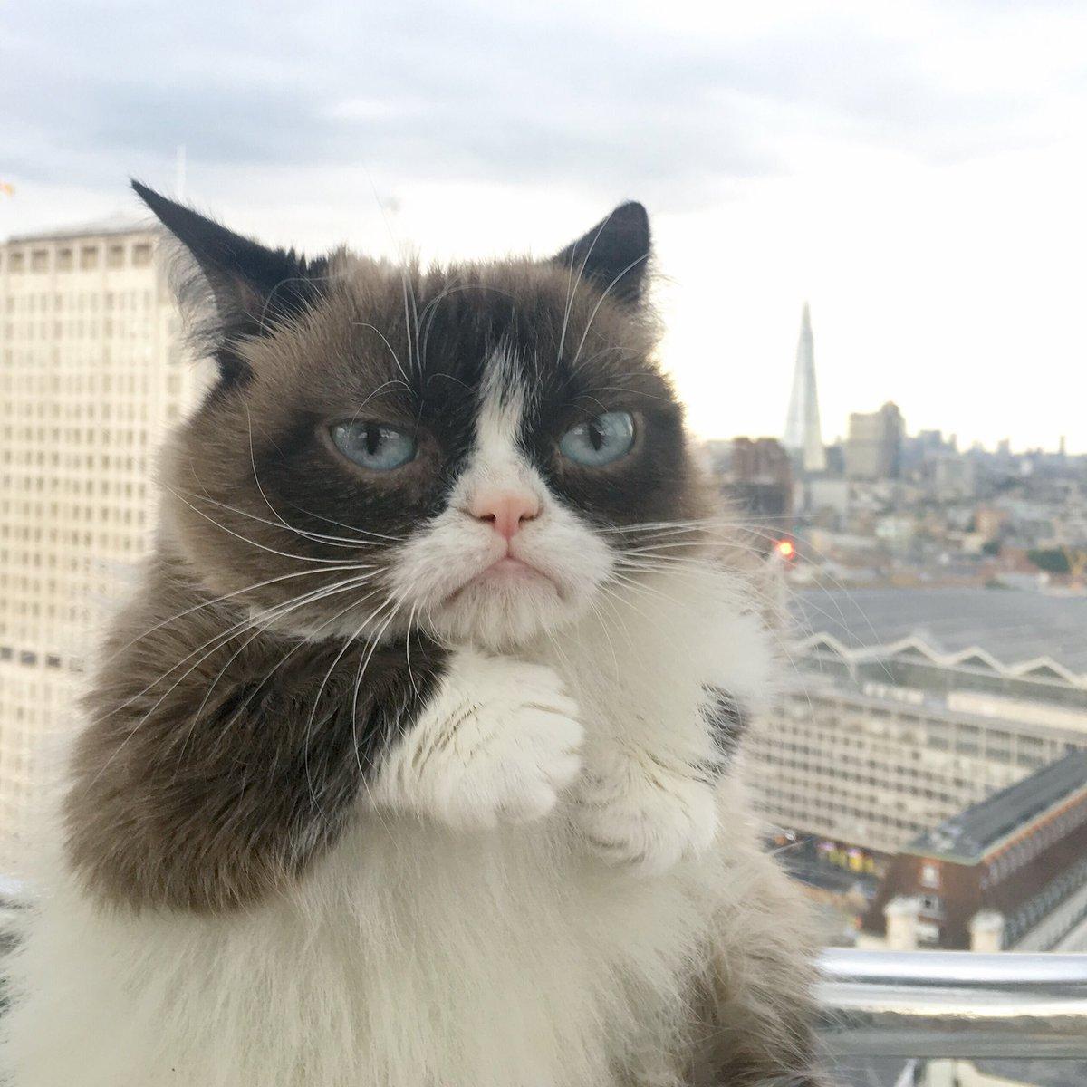 grumpy cat gif