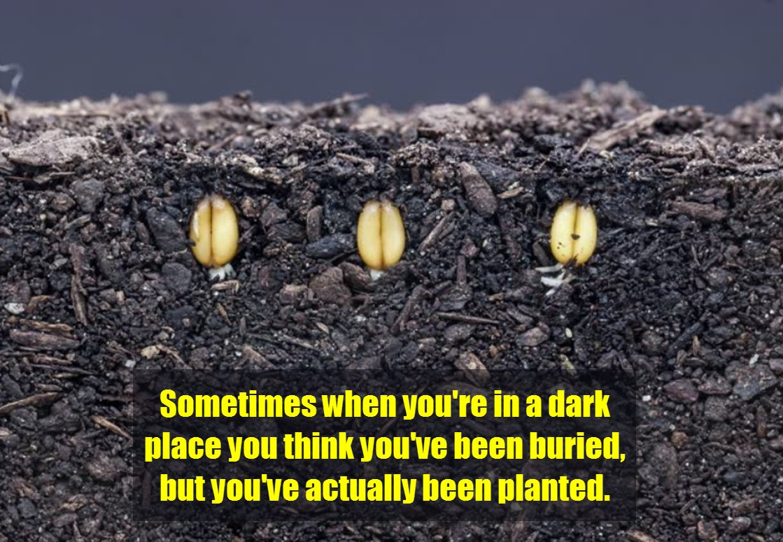 Sometimes when you're in a dark place you think you've been buried, but you've actually been planted. #quote https://t.co/WvsznISPxJ