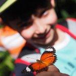 Add @australianbutterflysanctuary to your school holiday must do list in @kurandavillage! 🐛🌱 #exploreTNQ with @mumc… https://t.co/4oo3mKShCV