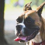 500RT:【デマだった】「ポケモンGOがきっかけで全ての保護犬に里親が見つかる」は誤報 https://t.co/Y0msLv25Uz 散歩ボランティアを実施した団体は、まだ里親の見つからない犬がたくさんいるとSNSで伝えてい… https://t.co/Y6YDuFwXjs