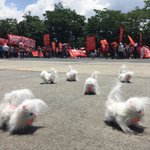 Ice breaker from SONA: A man displays these dancing toy-dogs while militant groups chant for the peoples agenda. https://t.co/aJkEMwEmUZ