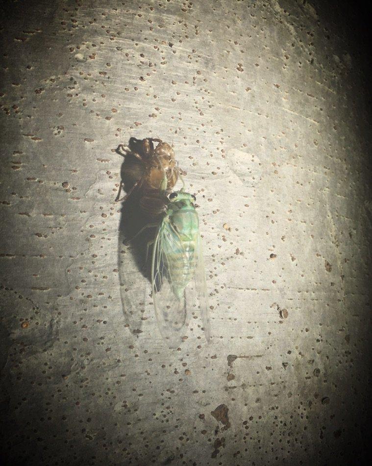 早朝と夜のお散歩。 私はポケモンを探すために。 夫は昆虫を探すために。 昨夜はこんな瞬間に出会いまし…