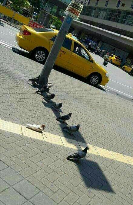 대만 비둘기들의 피서법 https://t.co/asDiCEWrHV