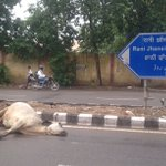 300 mtr from the RSS hq.Will gauraksha men come in time to clean up the revered, or in time only to kill the dalits? https://t.co/s24mwd0LeT