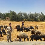 Picture of the Day: #Kabul Kids Herding Livestock Photo by @resh7d https://t.co/xbEJH5qYeF