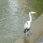 Todays London photos: baby duck in Regents Canal and a blue heron at the National Archives. #gradstudenttravels https://t.co/WrOMLOus08