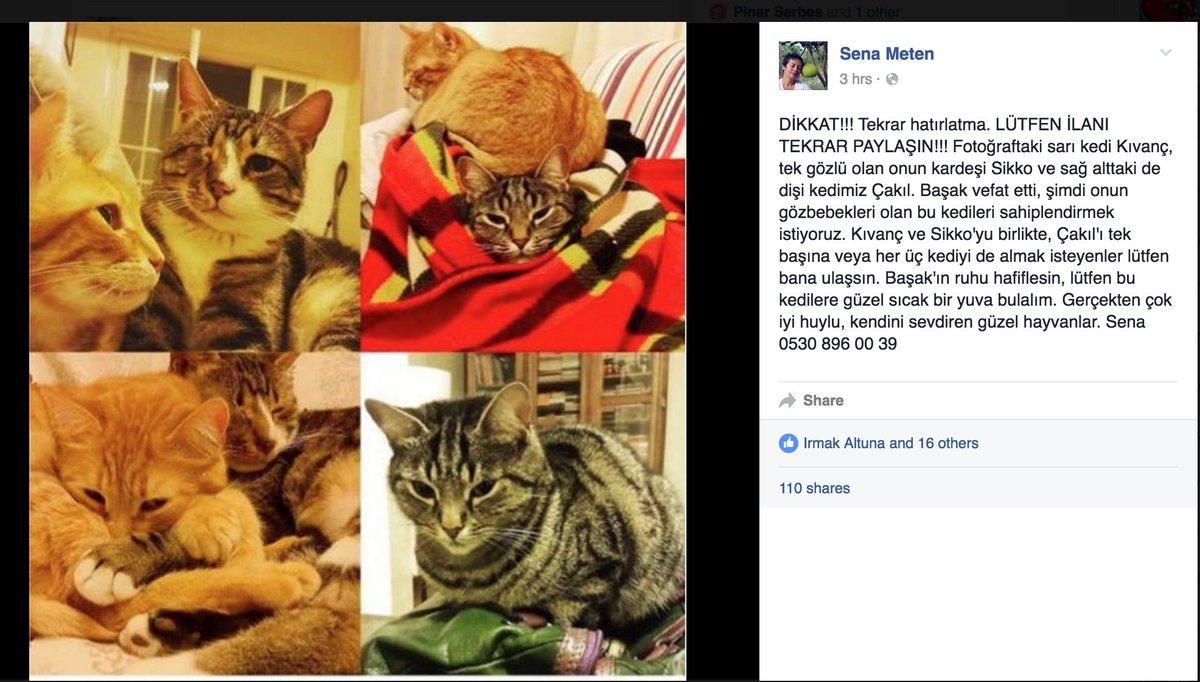 Geçen hafta kaybettiğimiz sevgili arkadaşımız Başak Tetik'in kedilerini sahiplenecek kişiler aranıyor. https://t.co/P0a0jqKtFP