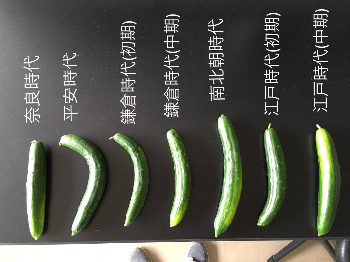 キュウリで表現した、日本刀の形状の変遷。笑 (無理がある)