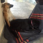 These 2 fur babies belong to Anthony(a car guard at Muizenberg circle) -they r homeless !Thank U for the donations https://t.co/U0oc6gl3N2