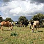 Pasa una jornada divertida en #YeguadaLaPerla aprendiendo sobre caballos lusitanos en plena naturaleza #Segovia https://t.co/Ys5i3EZcAE