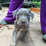 Pit bull puppies for sale HMU!! https://t.co/IhceXrHaKP
