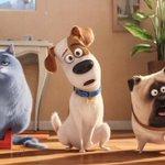 """""""La vida secreta de tus mascotas"""": la cinta animada más vista en su primer fin de semana https://t.co/OWzSdGd0Ad https://t.co/K598Y5VCd8"""