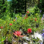 Dont forget to stop and smell the wildflowers 😊 https://t.co/WENbuT8mox