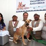 """Contento de anunciar la inauguración del """"1er Módulo Veterinario Municipal para Perros y Gatos"""" en Yucatán. https://t.co/d76IHSZJkN"""