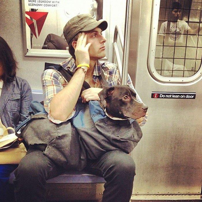 """ニューヨークの地下鉄が、「""""キャリアー""""に入れてないペットの電車への持ち込みを禁…"""