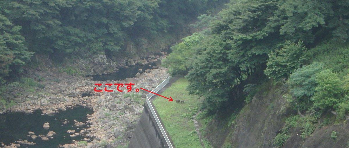 【薗原便り】本日の薗原ダム周辺は雨が降っています。今朝、ニホンカモシカの親子3頭が副ダム下流(右岸導…
