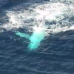 #BREAKING: White whale is not Migaloo according to Sea Worlds Trevor Long. #9News https://t.co/2Z2WWHHH7k