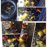 @ridwankamil @OdedMD @yossiirianto @DiskominfoBdg 26/7 Pas Jurig Cai, pengangkatan sampah S Citepus #PahlawanAdipura https://t.co/CWMYt55bAG
