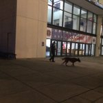 CMPD conducting security sweep around Convention Center. @wsoctv #WakeUpWith9 https://t.co/WGzvyD8ksr