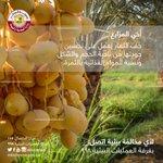 #رسالة_إلى المزارع خف الثمار يعمل على تحسين جودتها من ناحية الحجم والشكل ونسبة المواد الغذائية بالثمرة #قطر #Qatar https://t.co/C5nDWalo0p