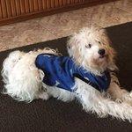Apareció este perrito perdido en la zona de Parque Rodó. Av. Sarmiento esq. Patria. Busca a su dueño. Favor de RT https://t.co/pLdvtX5Lag